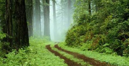 Bosque de la Sierra de Guadarrama