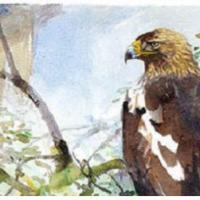 El águila imperial vuela alto en la Comunidad de Madrid