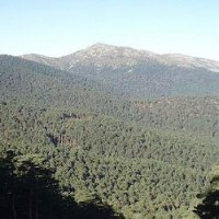 Analizan cómo adoptar nuevos métodos para mejorar la gestión forestal de los bosques
