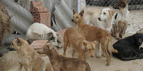 Perros abandonados.
