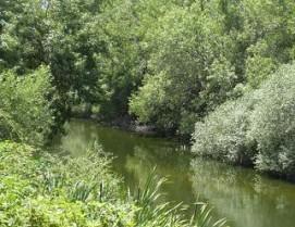 Río Guadarrama a su paso por Torrelodones