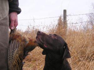 En ningún momento se propiciará ningún tipo de enfrentamiento con cazadores que ejerzan posibles actuaciones irregulares.