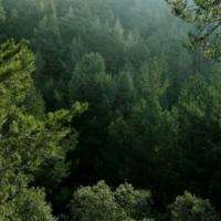 Un informe mide el valor económico de los bosques complejos