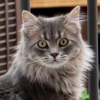 Solicitan un nuevo concurso para reubicar a los gatos del Aeropuerto de Barajas