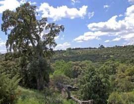 Área Homogénea Norte (Torrelodones).