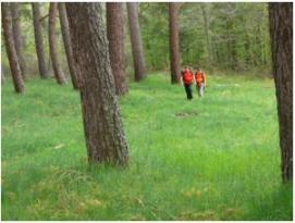 Excursionistas por los pinares de Valsaín.