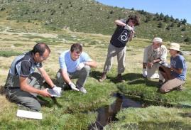 Suelta de ranas ibéricas en la Comunidad de Madrid.