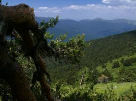 Bosque de alta montaña.