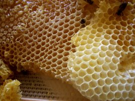 Panal de miel.