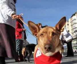 Desde Avanza Torrelodones se trabaja en la adopción de animales de compañía.