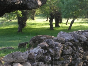 Camino del Canto de Castrejón. (Foto: Entorno Escorial).