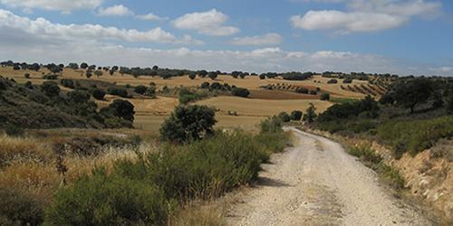 Las vías pecuarias vertebran el medio rural de la Comunidad de Madrid.