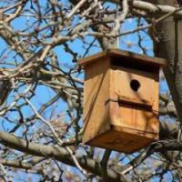 Taller de construcción de cajas nido con SEO BirdLife