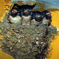 Una oportunidad para poner fin a la destrucción de nidos, refugios y otras molestias a la biodiversidad