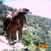 WWF alerta sobre el estado crítico de la biodiversidad europea