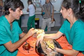 Veterinarios del centro atendiendo a una ave rapaz. (Foto: Comunidad de Madrid).