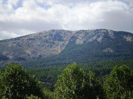 Pinar del Monte Abantos.