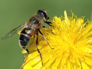 Las abejas tienen una importancia vital en la Naturaleza.