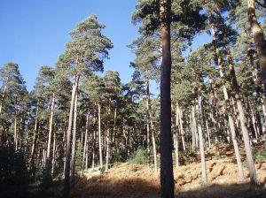 Valle de Valsaín, en la vertiente segoviana de la Sierra de Guadarrama. (Foto: Miguel303xm).