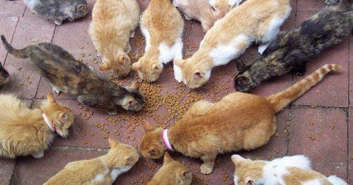 Grupo de gatos comiendo en la vía pública.