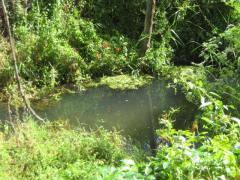 Aguas estancadas y de baja calidad en el arroyo del Molino. Foto: Globalízate.