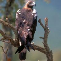 Una propuesta para la valoración económica de fauna silvestre afectada por acciones ilegales