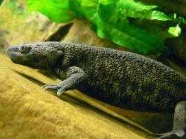 Alpedrete edita una guía sobre anfibios con motivo del Día Mundial de los Humedales.