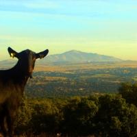 I Jornadas Gastronómicas de Cuchara y Puchero  de la Sierra Norte de Madrid