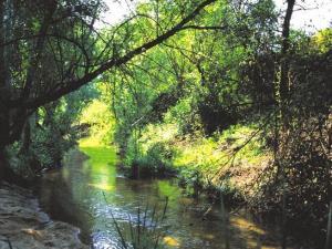 Bosque de ribera del río Guadarrama. (Foto Parque regional del Guadarrama).