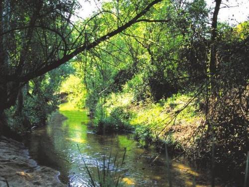 Retiran 300 metros cúbicos de residuos del río Guadarrama