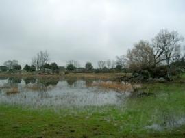 Laguna de Castrejón. (Foto: Entorno Escorial).
