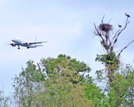 Podemos rechaza la construcción de un nuevo aeropuerto en la Comunidad de Madrid.