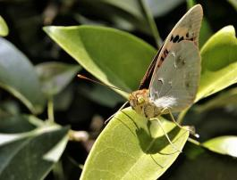 El jardín servirá como refugio para las mariposas serranas.