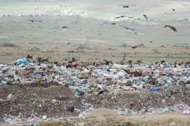 Los vertederos suponen una amenaza para las aves.
