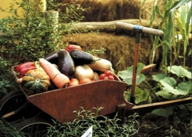 La agricultura ecológica va ganando peso en la Comunidad de Madrid.