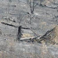 La Comunidad restaurará los terrenos particulares afectados por el incendio de Cadalso