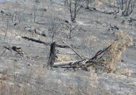 Zona arrasada por un fuego.