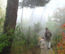 Arboreto 'Luis Ceballos'.