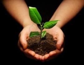 Con la plantación se pretende fomentar la participación ciudadana.