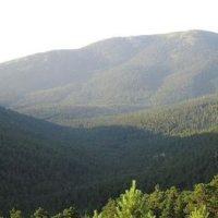 Cómo integrar la biodiversidad en la gestión forestal