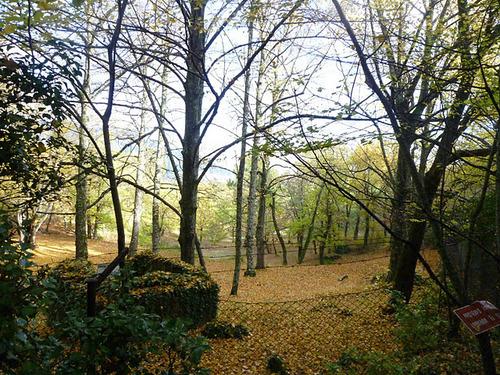 Fotos del picnic en el Bosque de la Herrería