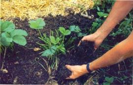 Huerta Clarita organiza unos talleres sobre agroecología.