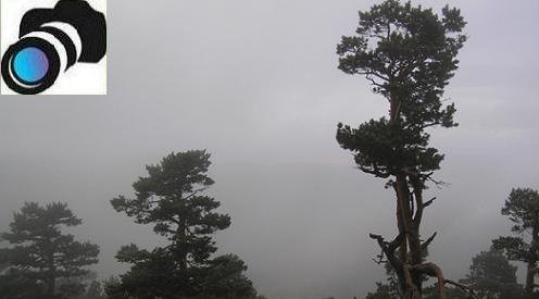 Los pinares de la Sierra.