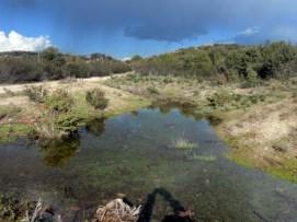 Charcas de La Berzosa.