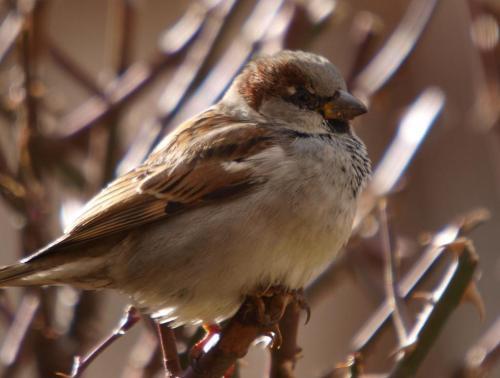 'Aves de Barrio', una campaña para asegurar la naturaleza y la calidad de vida en las ciudades