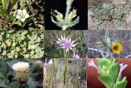 Algunas de las especies que se han visto afectadas.