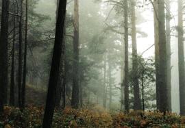 Bosque del Valle de la Fuenfría.