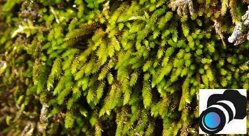 El mundo oculto de musgos y líquenes