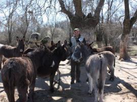 Grupo de burros de Cañada Real.