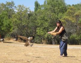 Las aves rapaces también tienen su lugar en Cañada Real.